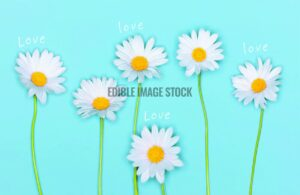 mothers day daisies