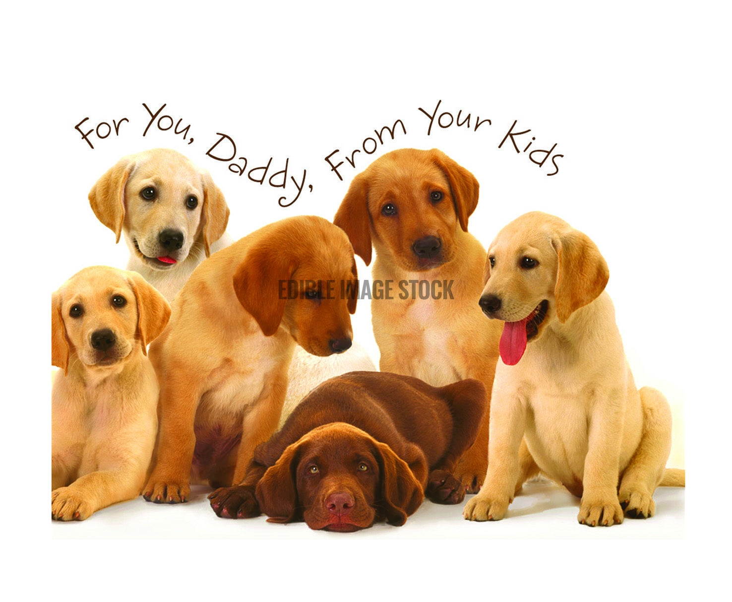 Fathers Day puppies